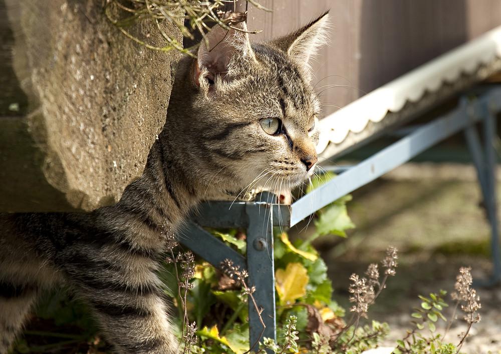 Koppers Katze