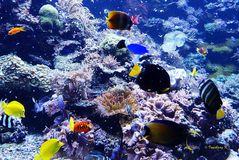 Korallen und Fische - Zoo Duisburg