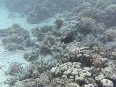 Korallengarten 1