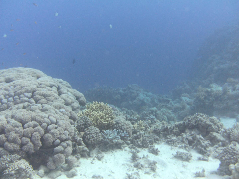 Korallengarten 2