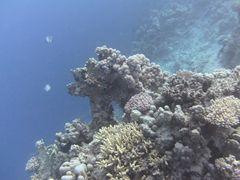 Korallengarten 4