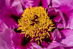 korallenriff-anemone? tanzende mehlwürmer?