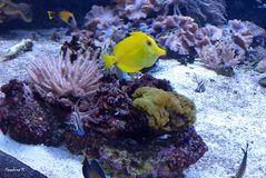 Korallenriff im Duisburger Zoo