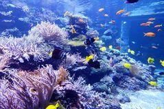 Korallenriff im Zoo Duisburg  - 1