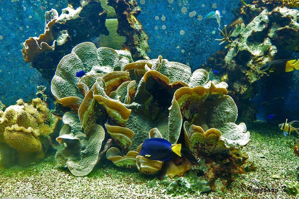 Korallenriff mit Fischen - Aquazoo Düsseldorf