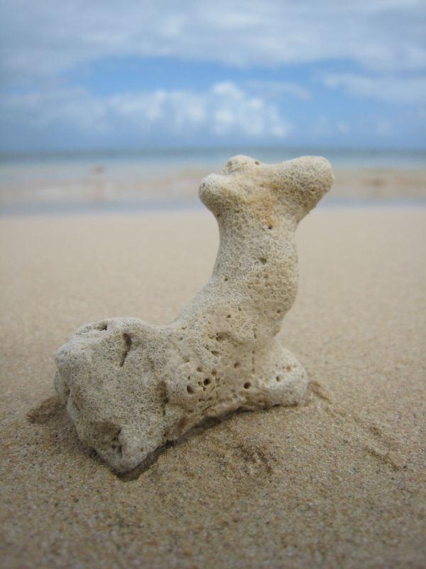 Korallentierchen