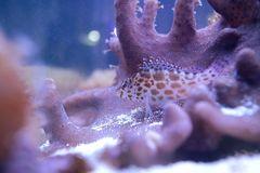 Korallenwächter bei der Arbeit.