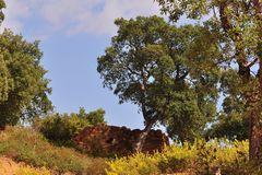 Korkeichenwälder bei Sainte- Maxime