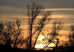 Kormorane im Sonnenuntergang