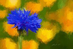 Kornblume vor gelben Blüten als moderne Gemälde