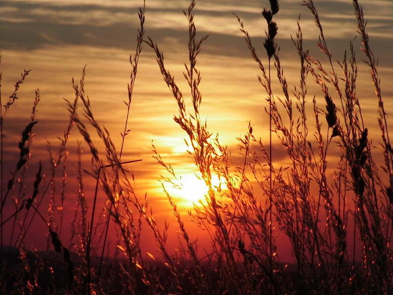 Kornfeld im Sonnenuntergang