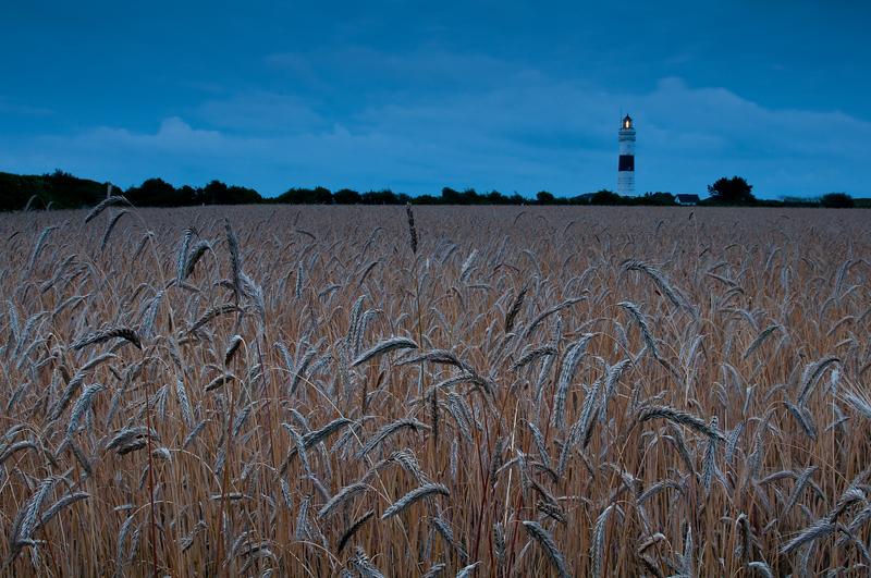 Kornfeld mit Leuchturm
