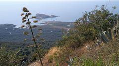 Korsikas Küsten(3)