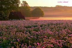 Kotten bei Sonnenaufgang im Tecklenburger Land