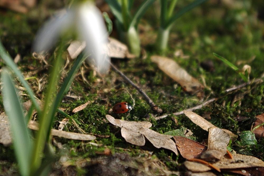 Krabbelnder Frühling