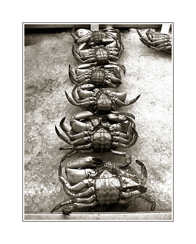 Krabben auf Eis