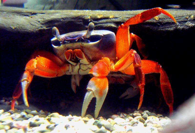 krabben unter wasser foto  bild  tiere zoo wildpark