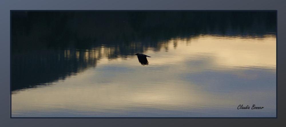 Krähe über dem Wienerwaldsee