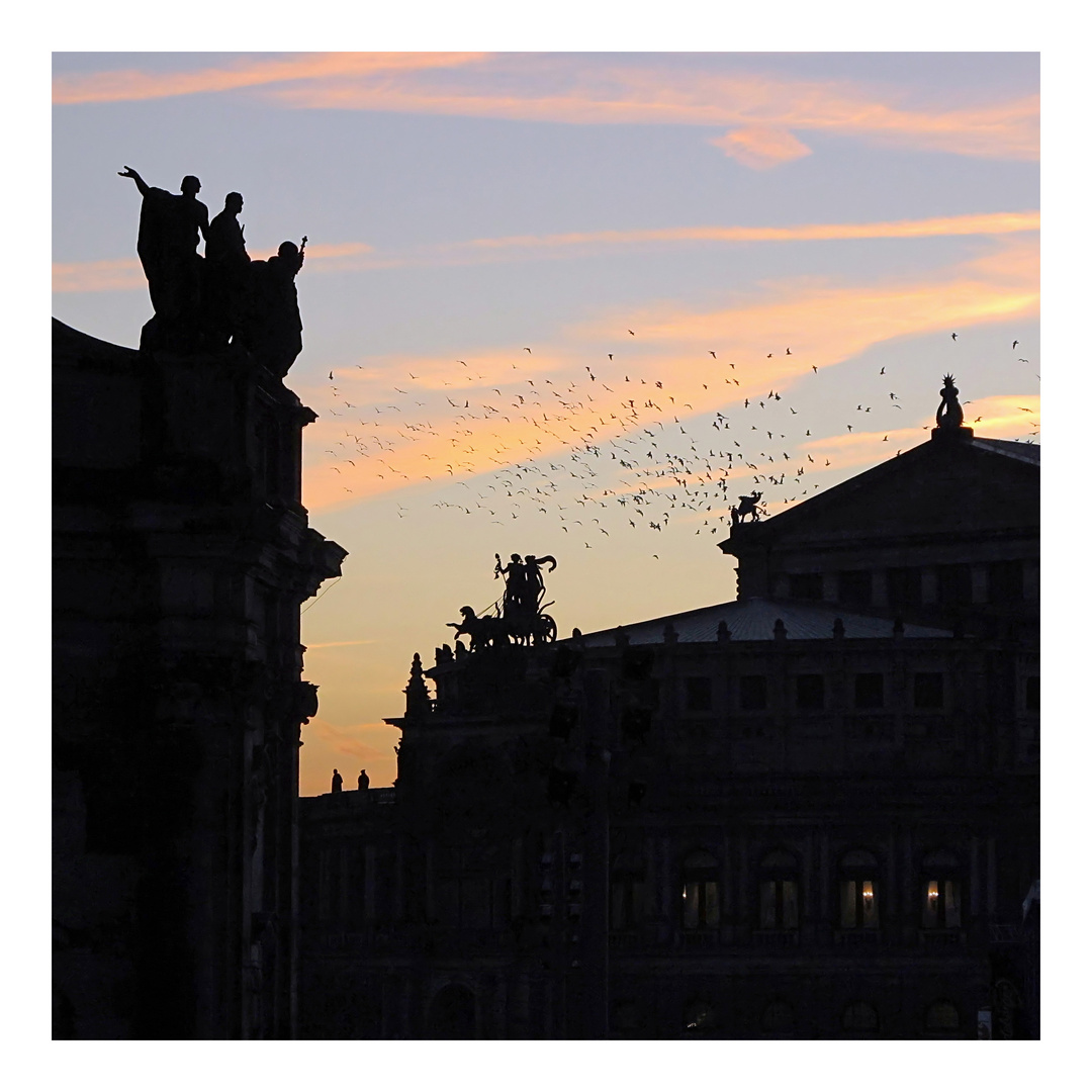 Krähen über Dresden
