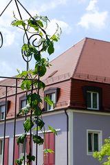 Kräutergarten II