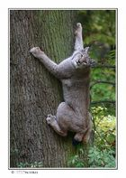 Kraftpaket am Baum