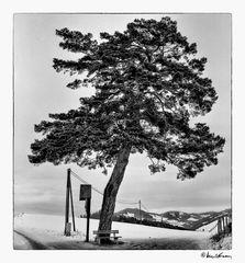 Kraftplatz in der Steiermark . Vintagefoto