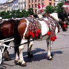 KRAKOW - Pferde-Schmuck