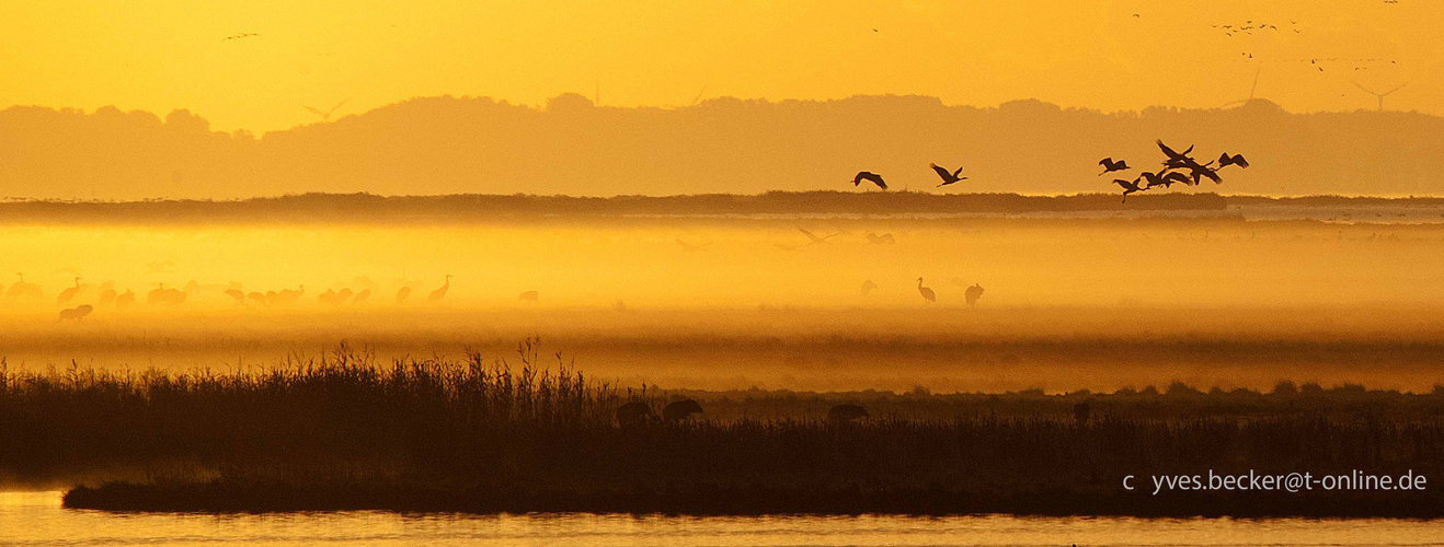 Kraniche am Drass - Morgenflug 1
