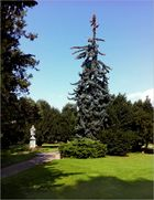 Kranker Baum im Park