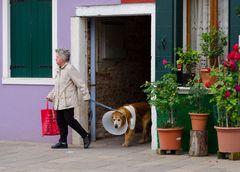 Kranker Hund in Burano