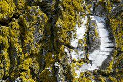 Kraterlandschaft Baumrinde