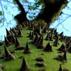 Kratzbaum für Fakire