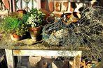Kreaktives Garten-Chaos