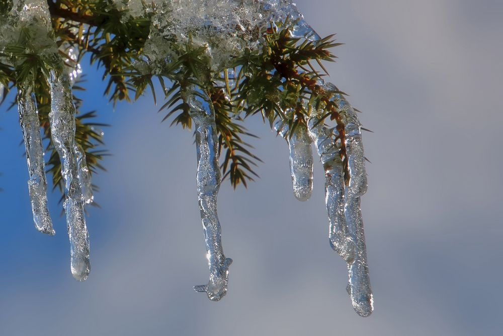 Kreation im Winter