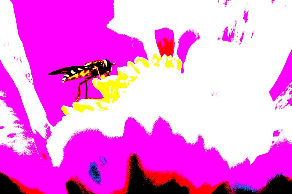 kreative Schwebfliege