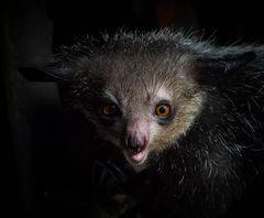 Kreaturen der Nacht