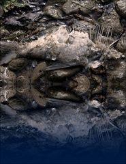 Kreaturen des Sees (4)