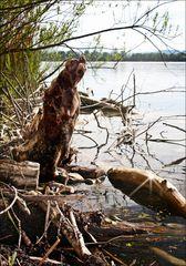 Kreaturen des Sees (6)