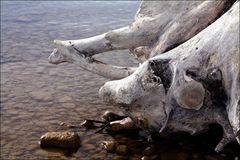 Kreaturen des Sees (7)