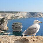 Kreidefelsen von Bonfacio - Korsika