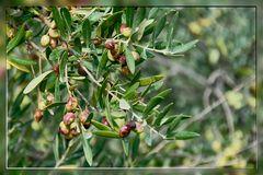 Kreta-2012_12_08-09_53_17