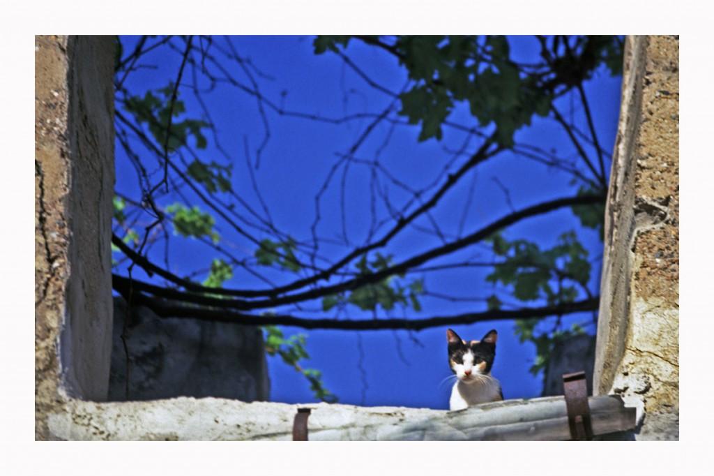 Kretische Katz