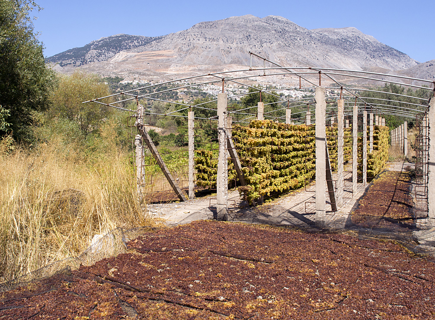 kretische rosinenfabrik