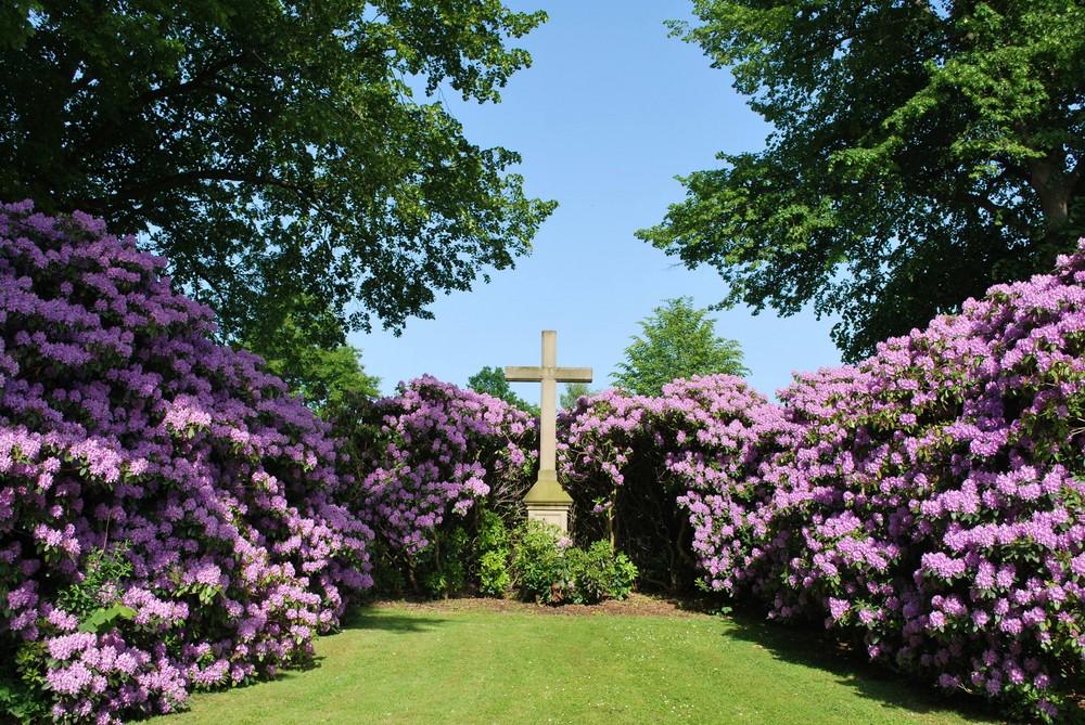 Kreuz in der Blüte