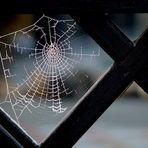 ..<<KREUZspinnennetz>>..