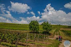 Kreuzung bei der Weinwanderung Sausenheimer Höllenpfad