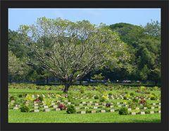 Kriegsfriedhof Thanbyuzayyat