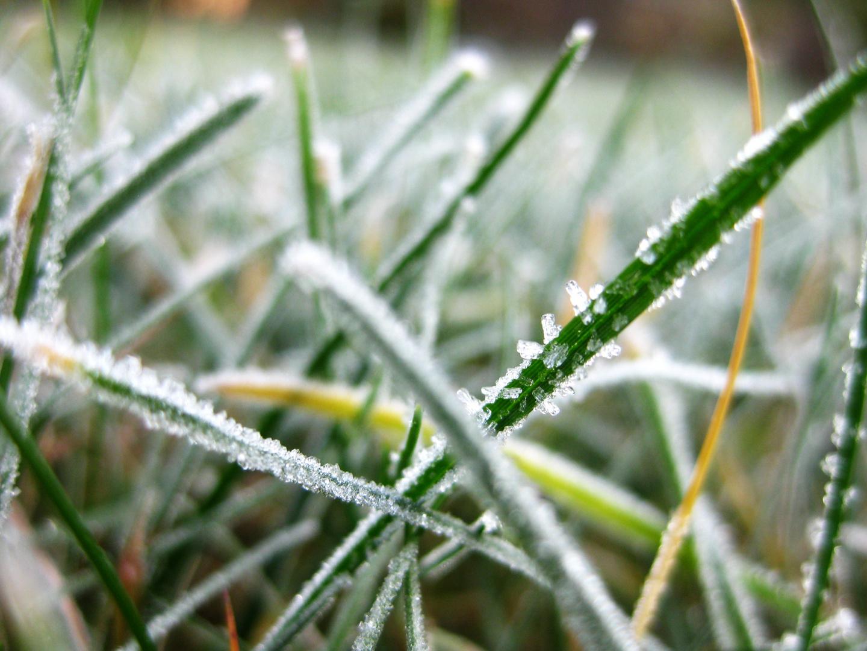 Kristalle am Gras