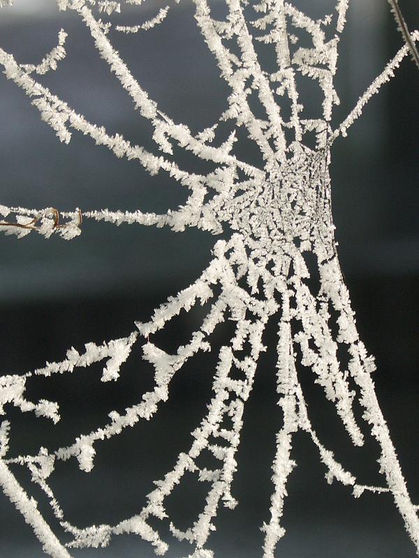 Kristalle gefangen im Netz