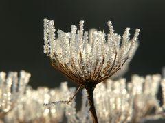 Kristalllüster